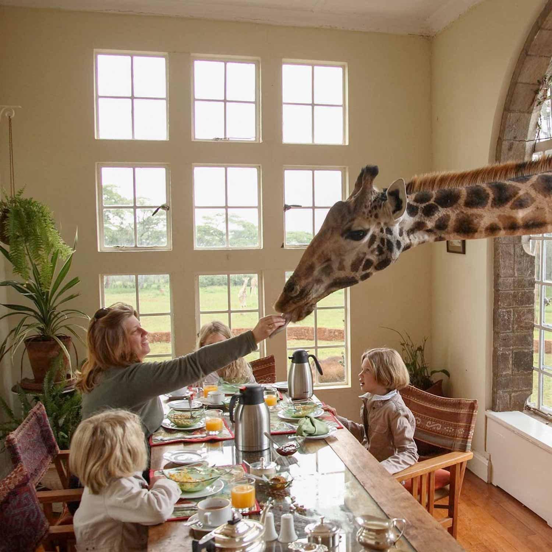 micato-giraffe_manor-1500